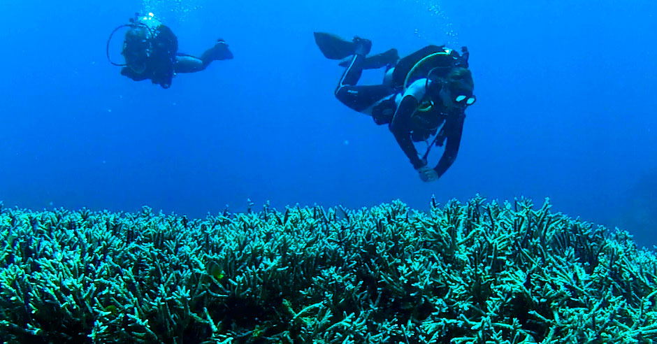 2016-3-29-Divers-close-to-reef