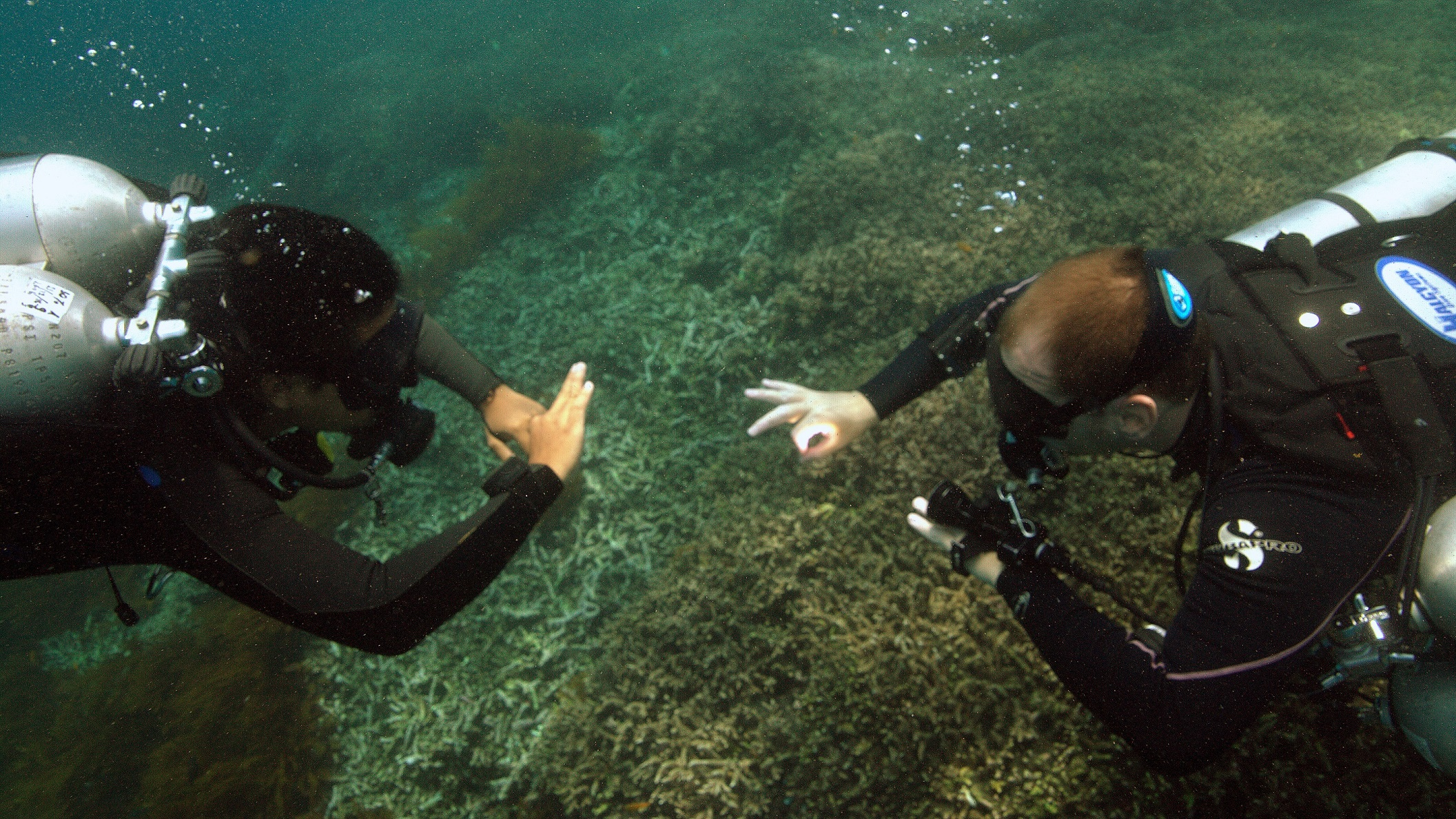 how is the gue fundamentals course different from the padi advanced rh ask livingseas asia Gue Tech 1 Gue Seattle